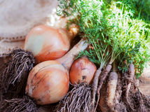 Verdure organiche Fotografie Stock Libere da Diritti