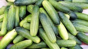 Verdure organiche del cetriolo fresco nel mercato dell'agricoltore Immagine Stock Libera da Diritti