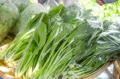 Verdure organiche fresche, cantone o cantonese Immagine Stock Libera da Diritti