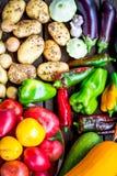Verdure organiche fresche Concetto della raccolta di autunno Immagine Stock Libera da Diritti
