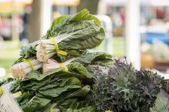 Verdure organiche fresche - il mazzo di insalata frondosa si inverdisce ad un'azienda agricola Fotografia Stock