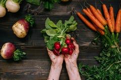 Verdure organiche Il ` s dell'agricoltore passa il ravanello raccolto tenuta sui precedenti di legno scuri, vista superiore Fotografia Stock