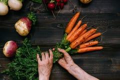 Verdure organiche Il ` s dell'agricoltore passa le carote raccolte tenuta sui precedenti di legno scuri, vista superiore Fotografie Stock Libere da Diritti