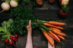 Verdure organiche Il ` s dell'agricoltore passa le carote raccolte tenuta sui precedenti di legno scuri, vista superiore Immagine Stock