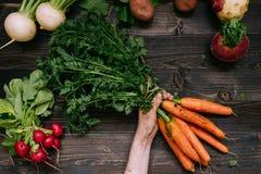 Verdure organiche Il ` s dell'agricoltore passa le carote raccolte tenuta sui precedenti di legno scuri, vista superiore Fotografia Stock Libera da Diritti