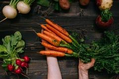 Verdure organiche La tenuta della mano del ` s dell'agricoltore ha raccolto le carote sui precedenti di legno scuri, vista superi Immagine Stock