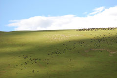 The verdure pasture under blue sky Royalty Free Stock Photo