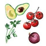 Verdure prezzemolo, avocado, pomodori ciliegia, cipolla dell'acquerello Fotografie Stock Libere da Diritti