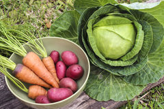 Verdure raccolte Immagini Stock