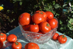 Verdure rosse del pomodoro Fotografia Stock