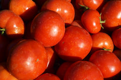 Verdure rosse del pomodoro Immagini Stock