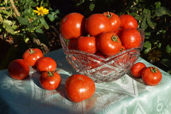 Verdure rosse del pomodoro Immagini Stock Libere da Diritti