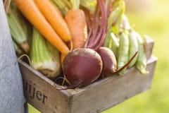 Verdure saporite fresche di Adult Man Holding dell'agricoltore in scatola di legno dentro Fotografia Stock