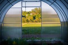 Verdure in serre, in pomodori, nel salat ed in più serra interna di orticoltura, vista del campo Fotografia Stock