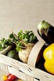 Verdure stagionali in canestro di vimini Il peperone dolce si inverdisce l'avocado della rapa della melanzana Fotografia Stock Libera da Diritti