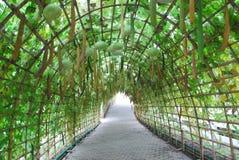 Verdure tailandesi Fotografie Stock