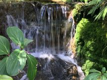 Verdure tropicale de jungle avec la cascade Images stock