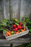 Verdure in una scatola Fotografie Stock Libere da Diritti
