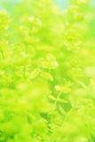 Verdure under water plant Stock Photography