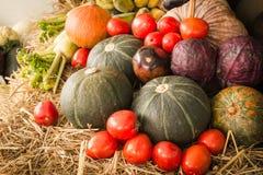 Verdure variopinte di autunno e frutta/raccolto Fotografia Stock Libera da Diritti