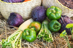 Verdure variopinte di autunno e frutta/raccolto Immagine Stock