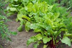 Verdure verdi fresche immagini stock