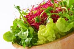 Verdure verdi Mixed sulla lastra di vetro Immagine Stock