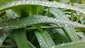 Verdure verte Photo stock