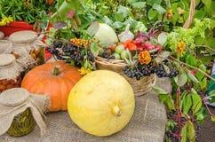 Verdure, zucche e bacche marinate al festival del raccolto Fotografia Stock Libera da Diritti