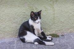 Verdwaald katje in de straat Stock Afbeelding