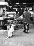 Verdwaald moeras bij zwart-wit voedselmarkt Royalty-vrije Stock Foto