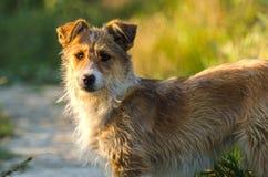Verdwaald puppy in een tuin Stock Afbeelding