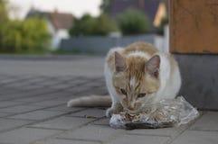 Verdwaalde Cat Eating stock foto's