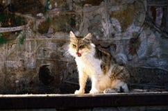 Verdwaalde Cat Licking Itself Clean op Steenbestrating Royalty-vrije Stock Afbeeldingen