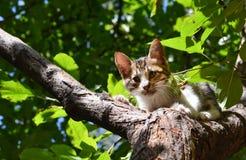 Verdwaalde die kat op de boom wordt geplakt Royalty-vrije Stock Foto's