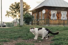 Verdwaalde gemberkat die onderaan de weg op de achtergrond van een dorpshuis lopen royalty-vrije stock afbeelding