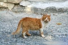 Verdwaalde gemberkat op een sjofele straat stock afbeelding