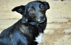 Verdwaalde hond Royalty-vrije Stock Foto's