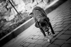 Verdwaalde hond Stock Foto's