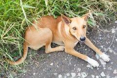 Verdwaalde hond Stock Afbeelding
