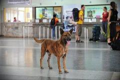 Verdwaalde hond Stock Foto