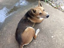 Verdwaalde hond Royalty-vrije Stock Fotografie