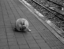 Verdwaalde hond bij het treinplatform stock afbeeldingen