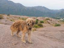 Verdwaalde hond die rond dichtbijgelegen Capilla del Monte zwerven royalty-vrije stock fotografie