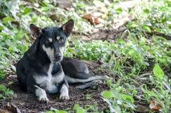 Verdwaalde hond onder de boom het letten op camera Royalty-vrije Stock Foto's