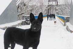 Verdwaalde hond op straat bij de winter Stock Afbeelding