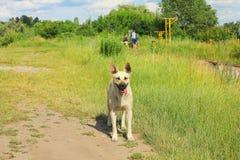 Verdwaalde hond op straat bij de zomer Stock Foto
