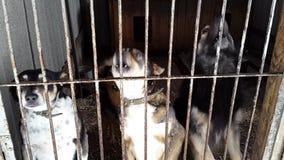 Verdwaalde honden in de schuilplaats in de Oekraïne stock footage
