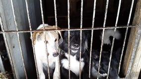 Verdwaalde honden in de schuilplaats in de Oekraïne stock video