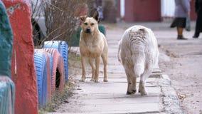 Verdwaalde honden op de straat in de stad stock footage
